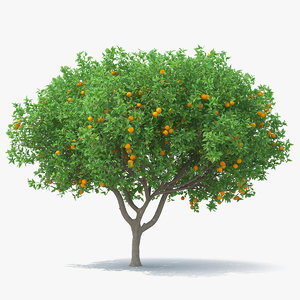 orange tree fruits model