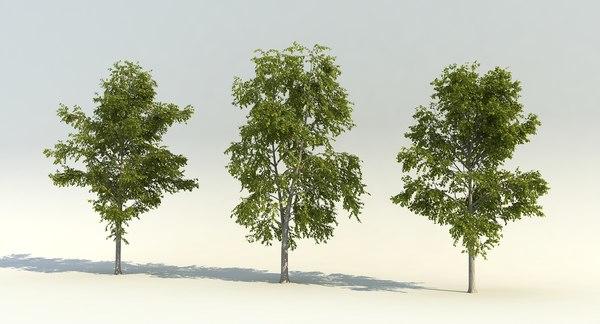 wind tree 3D model