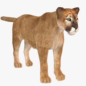 3D vary fur puma