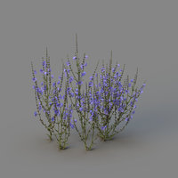 3D chicory blossoms