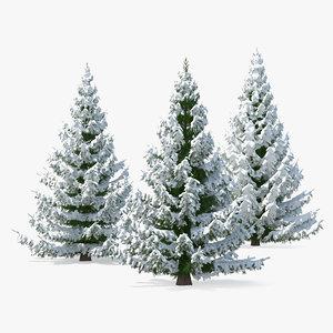 3D spruce snow tree