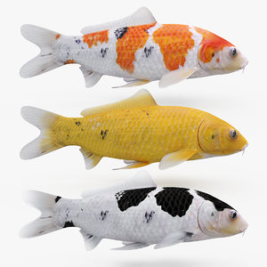 koi fishes animation 3D model
