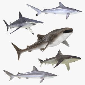 3D rigged sharks 6