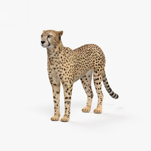 3D model cheetah mammal animal