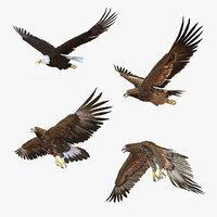 3D model rigged eagles 2