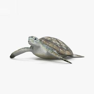 3D model hawksbill sea turtle