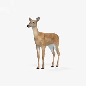 doe deer mammal 3D model