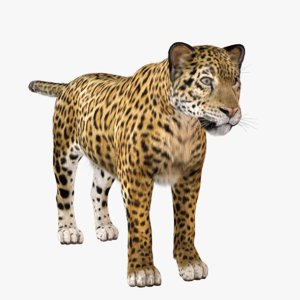 3D vary fur