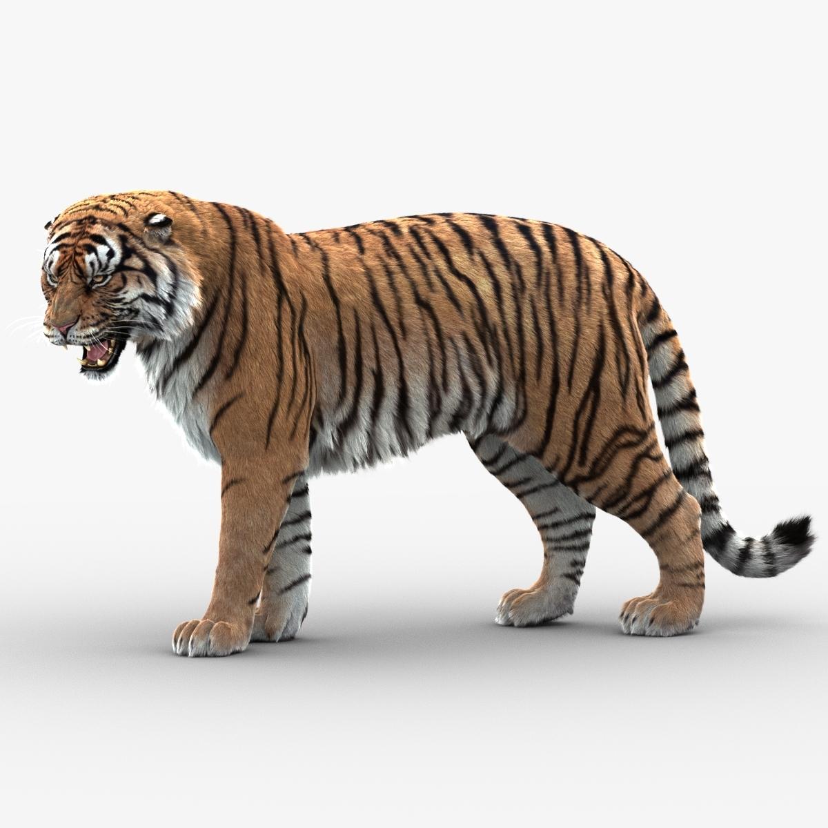 3D tiger animation fur