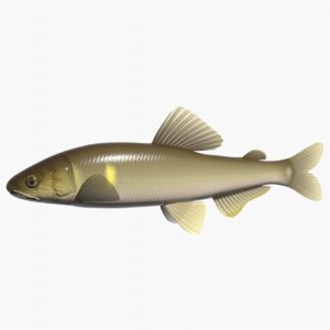 3ds max sweetfish ayu