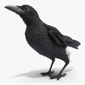 raven jumping rigged animate model