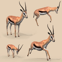 3D gazelle animation rig model