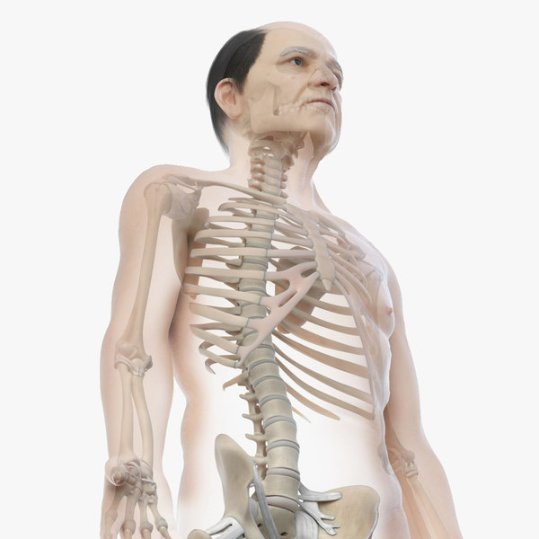 skin elder male skeleton 3D model
