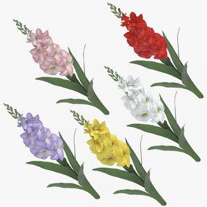 gladiolus photorealistic 3D