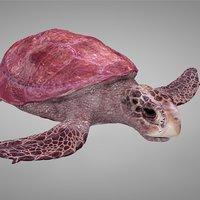 3D model sea turtle pink l265