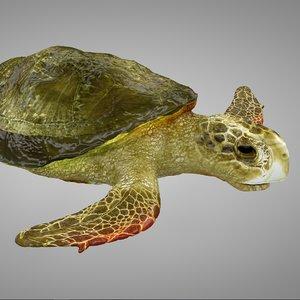 sea turtle green yellow 3D