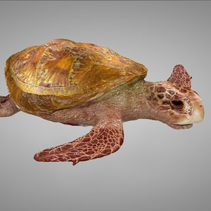 3D sea turtle yellow pink model