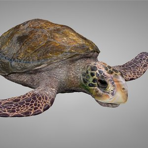 3D model sea turtle brown white