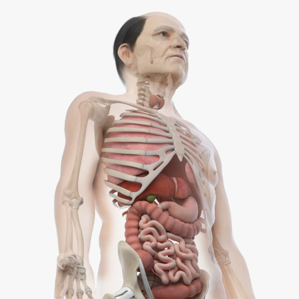 3D skin elder male skeleton