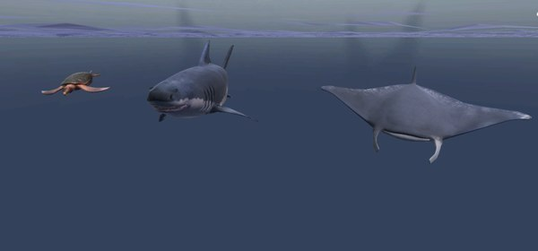 animals swim 3D model