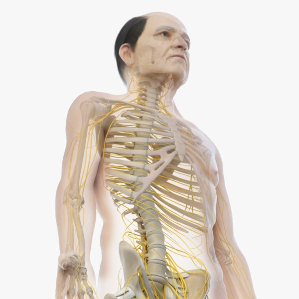 3D skin elder male skeleton model