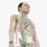 3D model skin elder male skeleton