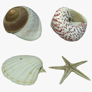 sea shells starfish 3D model