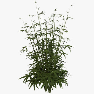 young bamboo plant model