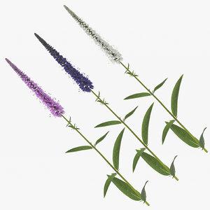 3D veronica longifolia