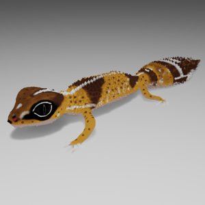 african fat tailed gecko 3D model
