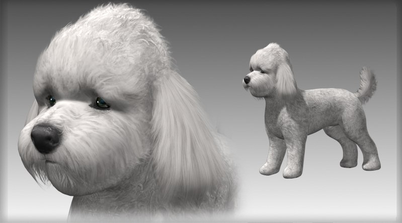 Poodle Small Dog