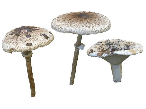 mushroom pack 3 hd 3D model