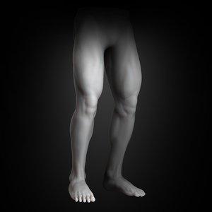 human muscular lower body model