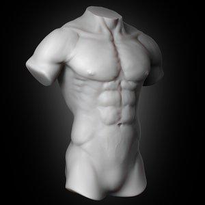 human muscular torso 2019 model