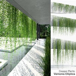 creeper plants: vernonia elliptica 3D model