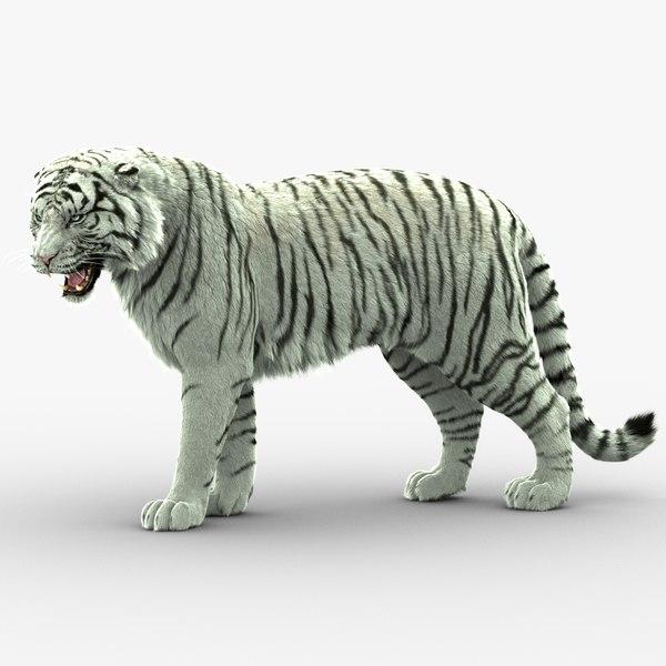 tiger animation fur 3D model