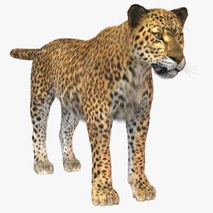 3D vary tiger fur model