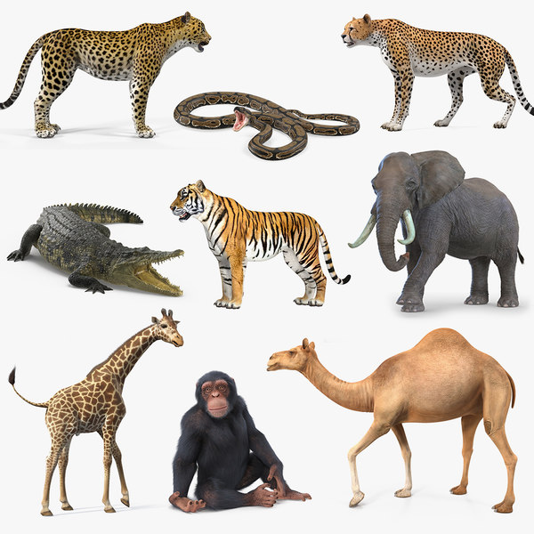 3D rigged african animals 6