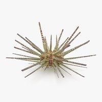 pencil urchin 3D model