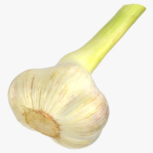 3D model hardneck garlic 01