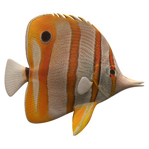 3D butterfly fish