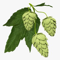 fresh branch hops 3D model