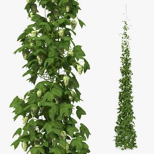 green growing hops plant 3D model