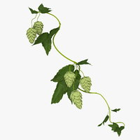 3D hops branch