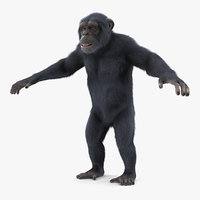 chimpanzee t-pose dark fur model