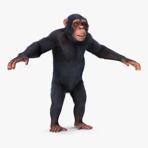 3D chimpanzee t-pose light fur animal