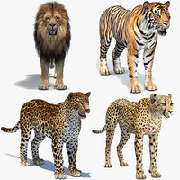 big cats lion 3D