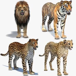 big cats lion 3D