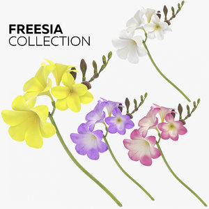freesia photorealistic 3D model