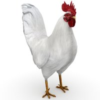 rooster white 3D model